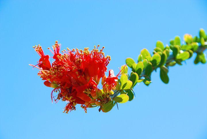 Cactus Flower - Richard W. Jenkins Gallery