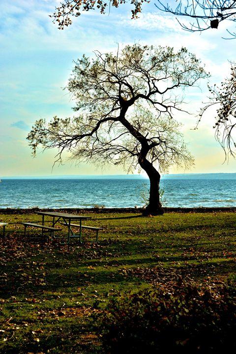 Lone Tree On the Lake - Richard W. Jenkins Gallery