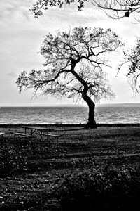 Lone Tree Black and White