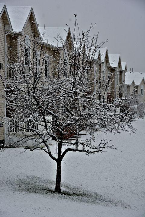 Winter Tree - Richard W. Jenkins Gallery