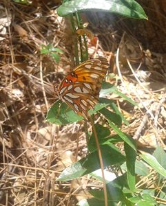 butterfly - ModernArt