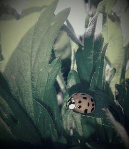Ladybug1 - ModernArt