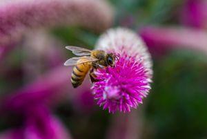 Bee fed