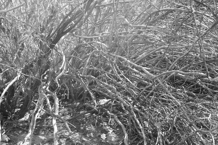 Branches - Catching Zen Studios