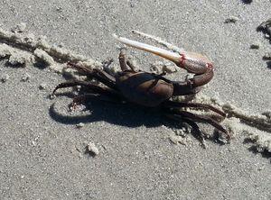 Mad Crab