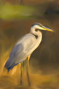 Blue Heron II - Don Wright