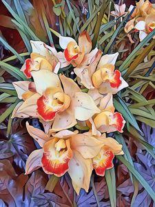Burst of Orchids