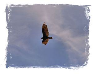 Flying High - John Wortman