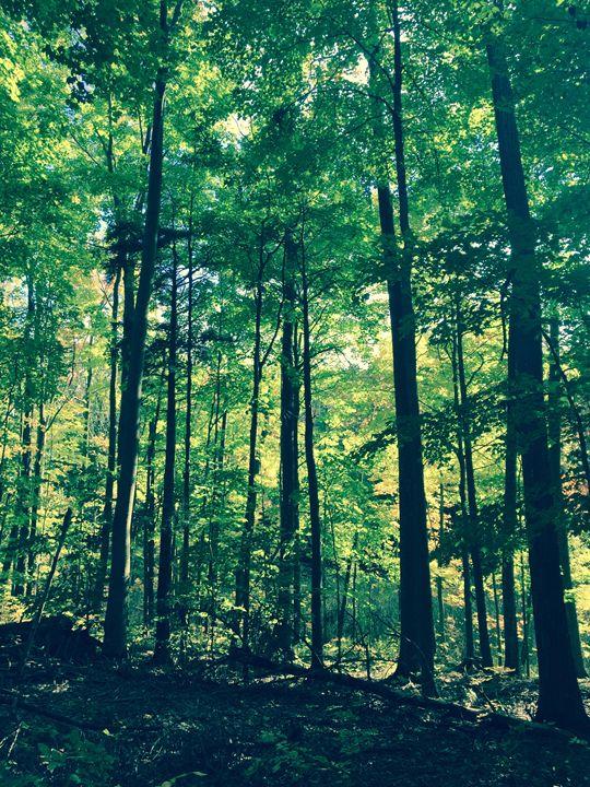 Forest - Logan