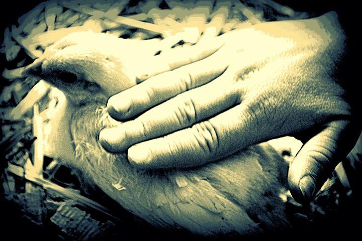 A Loving Hand - Ethereal Organics...diane montana jansson