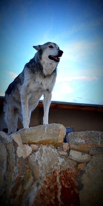 Wolves VIII - Ethereal Organics...diane montana jansson