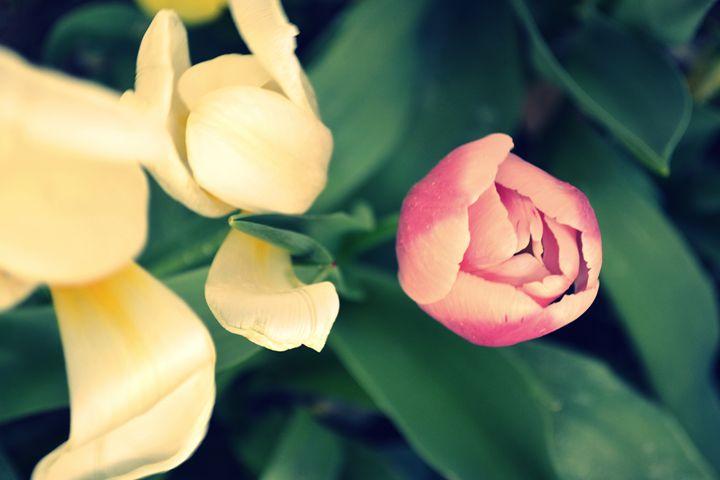 Rigid Petals - Ethereal Organics...diane montana jansson