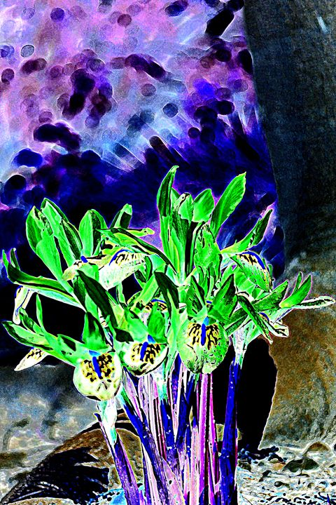 Iris III - Ethereal Organics...diane montana jansson