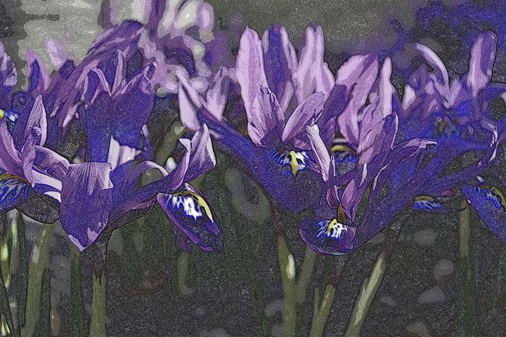 Iris VI - Ethereal Organics...diane montana jansson