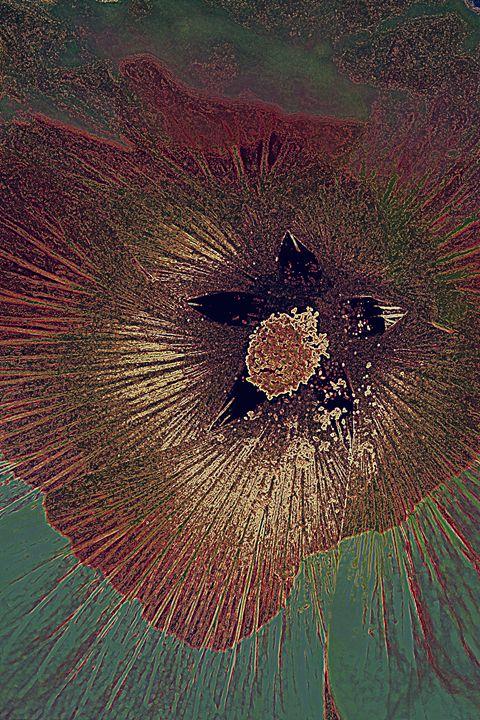eye of a hollyhock - Ethereal Organics...diane montana jansson