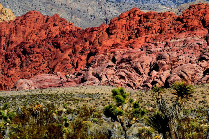 Red Rock Canyon 7 - Ethereal Organics...diane montana jansson
