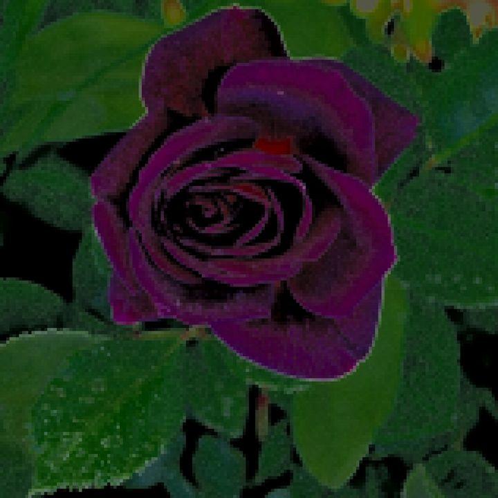 purple rosetapestry - Ethereal Organics...diane montana jansson