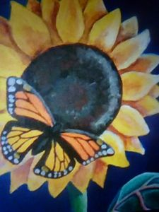 butterfly on sunflower
