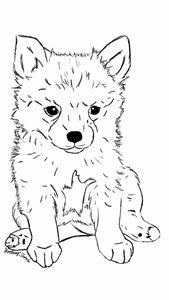 Puppy Enzo