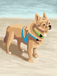Enzo on the beach