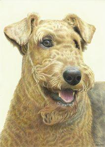 Airedale Terrier - Melissa White (Easelartworx)