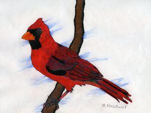 Cardinal on branch - Mark's Art