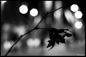 leaflonliness