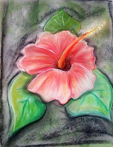 Flor de maga Puerto Rico