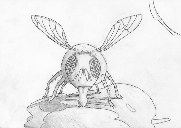 fly eating apple (pinned) - The broken teleporter