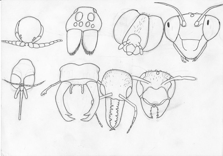 insect heads (pinned) - The broken teleporter