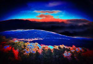 White Mountain Wonder