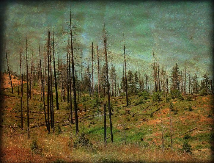 Burnt Forest - MaryLanePhotography