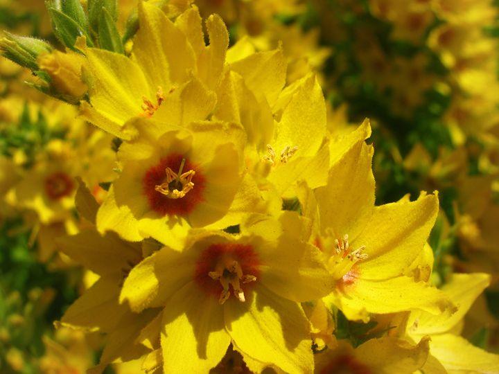 Pretty Yellow Somethings - MaryLanePhotography