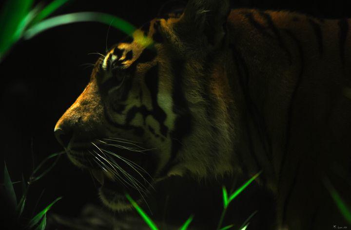 Tiger 2 - Spider Milk Photography