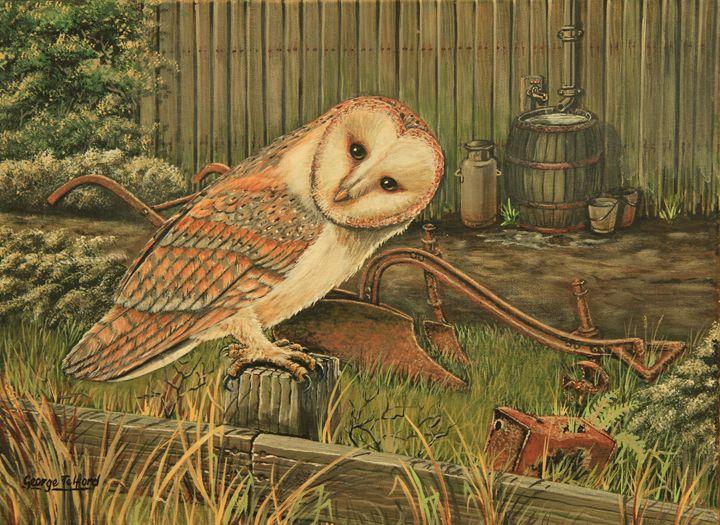 The Barn Owl - george telford