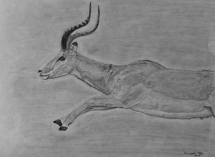 Antelope Leap - Hanunyah Fish