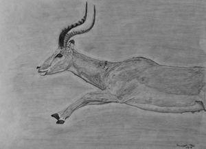 Antelope Leap