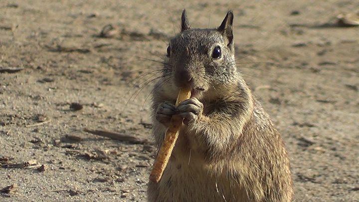 Squirrel eats a French Fry - Xena Warrior Princess Fan