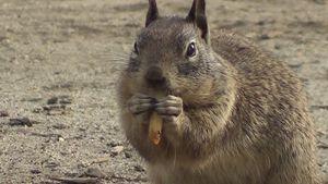 Squirrel eating good