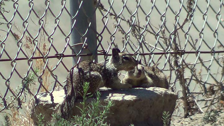 squirrel buddies - Xena Warrior Princess Fan
