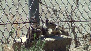 squirrel buddies