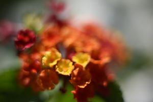 Warming Bloom