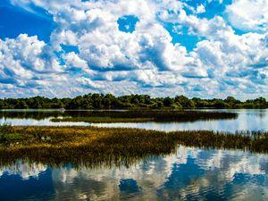 Freshwater Meadow
