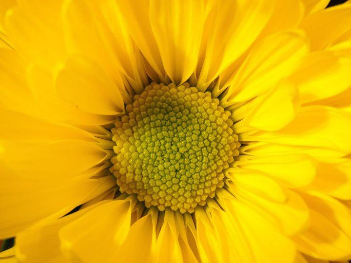 Yellow Flower - Aaron Alvarez