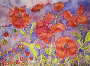 Dense field of poppies. gvp1535