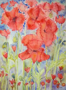 Poppies above and below. gvp1537