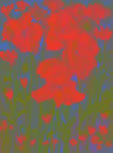 Vague dream of poppies.  gvp1538