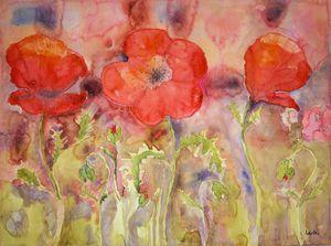 Three poppies in a field. gvp1539