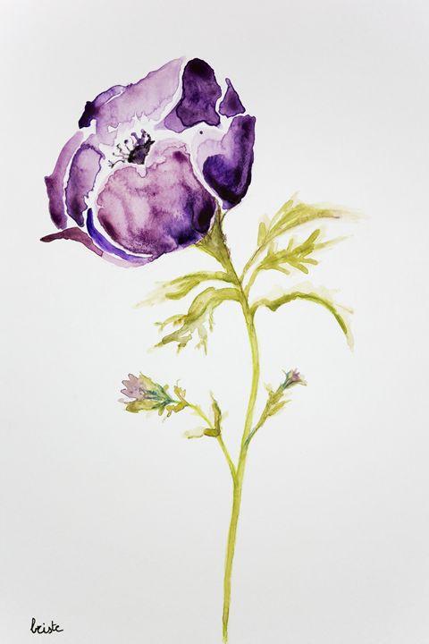 Purple anemone on a white background - BRISTE
