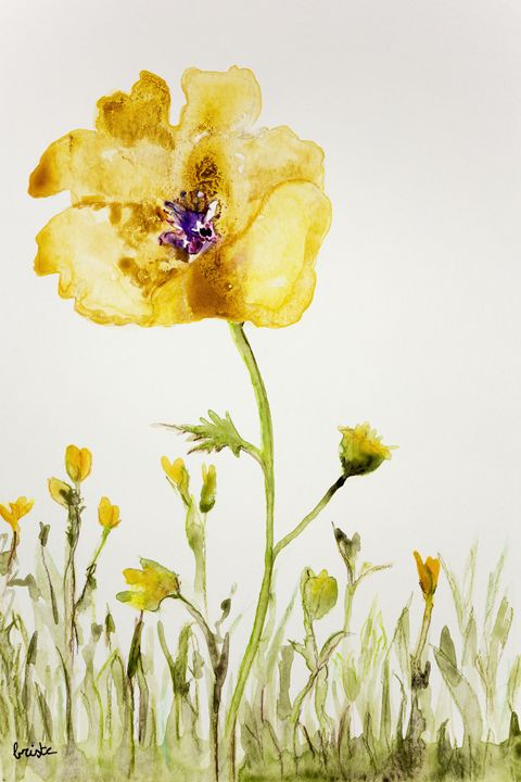 Yellow anemone on a white background - BRISTE